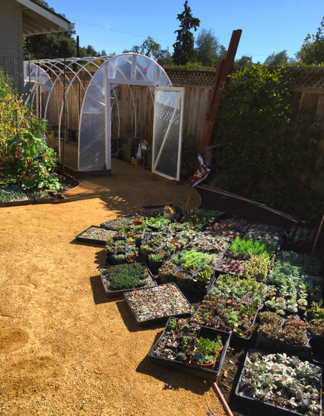 Doors in place with a small sampling of the succulents that will live in the greenhouse.
