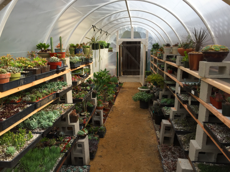 The greenhouse is packed for the winter.